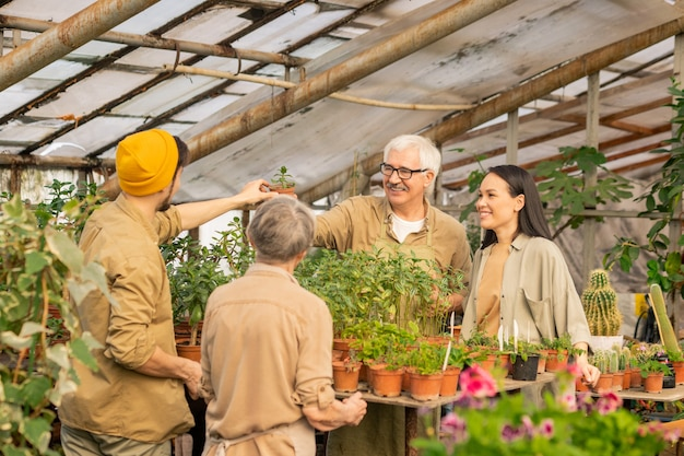 Positivi i lavoratori del vivaio che passano la pianta in vaso attraverso il tavolo pieno di piante verdi mentre si prendono cura delle piante insieme nella serra