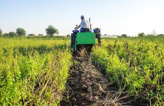 Patate che si trovano sul terreno sullo sfondo di un trattore scavatore. processo di scavare un raccolto di patate