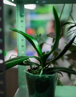 Vasi con piante nel posto di ricerca scientifica del laboratorio di esperimento di biologia