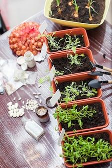 Vasi con piantine di erbe nella cucina di casa
