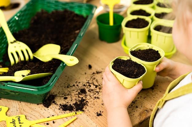 Vasi con terreno su un tavolo in legno per piantare semi e piantine di ortaggi, micro verdi, rucola, concetto di giardinaggio e piantare piante.