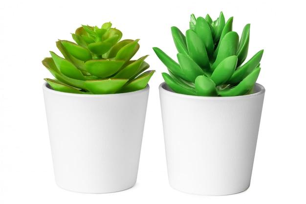 Vasi con piante succulente isolate