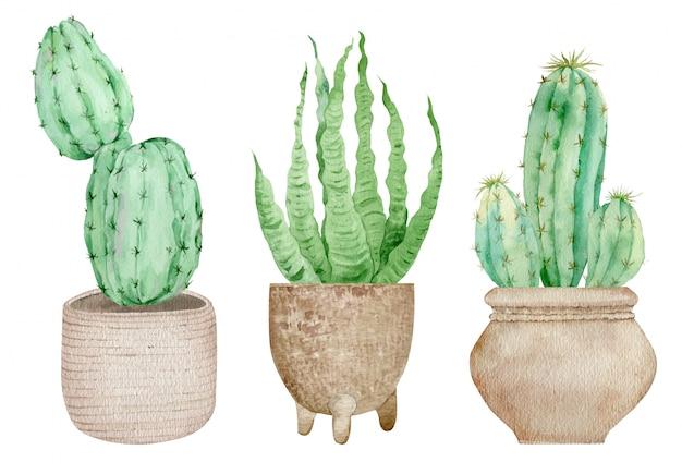 Cactus in vaso isolati su sfondo bianco. illustrazione stabilita disegnata a mano dell'acquerello
