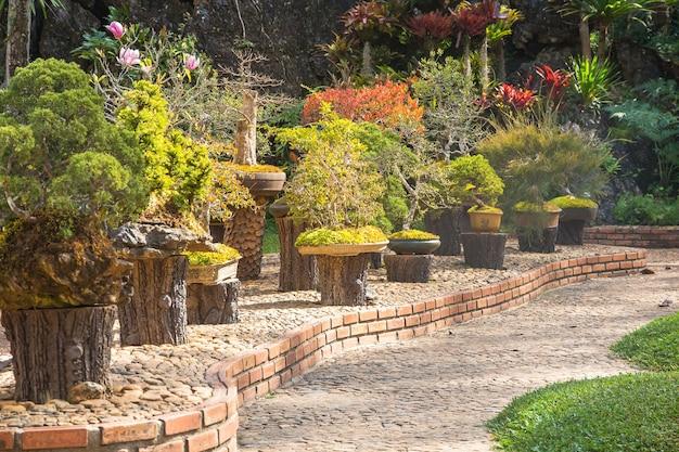 Pino in vaso per la decorazione del giardino, bellezza del giardino paesaggistico