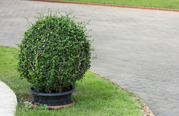 Decorazione della pianta in vaso sul marciapiede nel giardino all'aperto