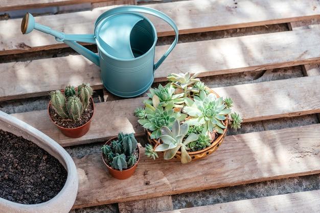 Succulente e cactus in vaso pronti per essere ripiantati su fondo di legno