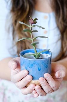 Terapia artistica della ceramica. tempo libero rilassante creativo. stoviglie fatte a mano. mani che tengono una brocca di argilla artigianale con dentro una pianta