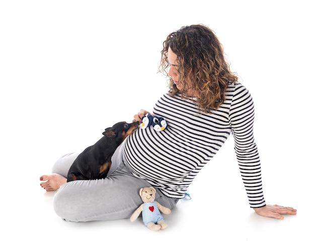 Donna incinta e pinscher isolati su bianco