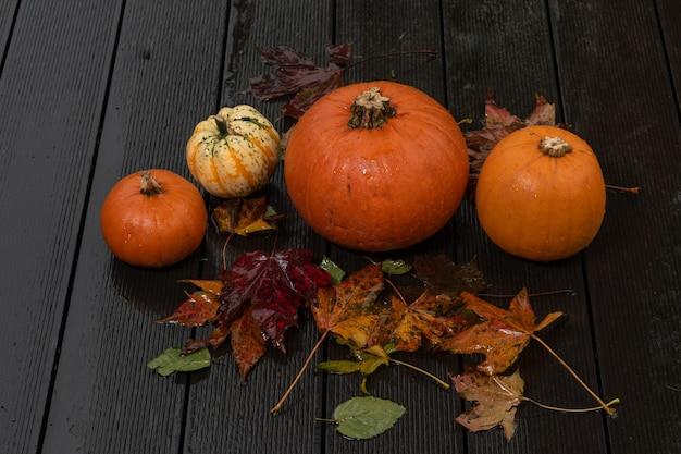 Preparazione per helloween, zucche sul decking bagnato con foglie bagnate e gocce di pioggia