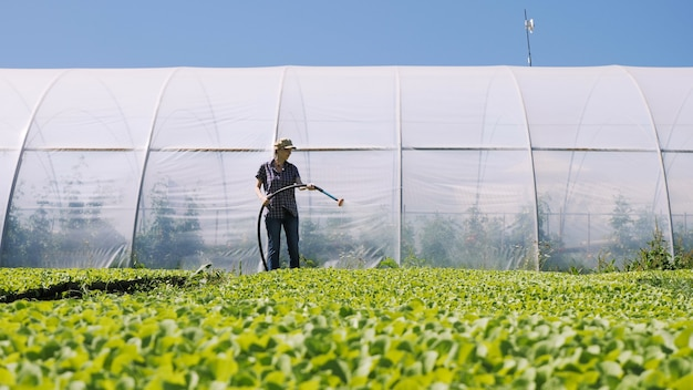 L'agricoltore grazioso irriga le giovani piantine verdi sul campo vicino alla serra