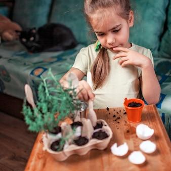 Bella studentessa che coltiva erbe da cucina nel guscio d'uovo, rosmarino e timo, concetto di giardinaggio a rifiuti zero, serra e stile di vita sano