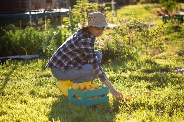 Giardiniere abbastanza giovane donna in cappello raccoglie limoni in un cesto nel suo orto in una giornata di sole