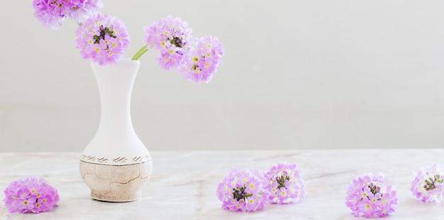 Primula in vaso di ceramica su superficie bianca