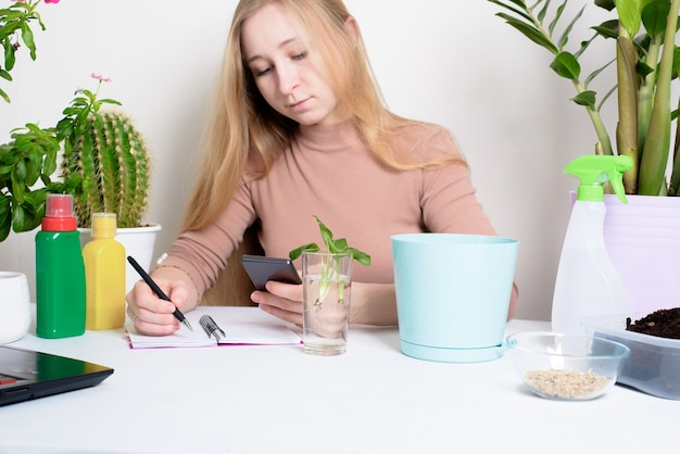 Processo di piantare una pianta d'appartamento da una donna in una pentola per la germinazione a casa. processo graduale per scattare foto sul telefono, piantare fiori online.
