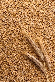 Chicchi di grano dorato organico trasformati come sfondo verticale agricolo. un sacco di texture di semi e una spiga di grano maturo su di esso, vista dall'alto. raccolta e agricoltura, attività di panificazione.