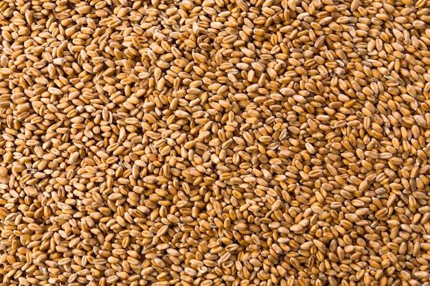 Struttura dei chicchi di grano dorato organico trasformati come sfondo agricolo. molti semi, vista dall'alto. raccolta e agricoltura, attività di panificazione.