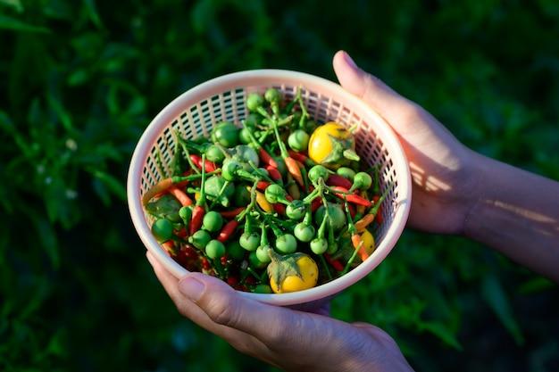 I prodotti dal orto vicino alla casa.