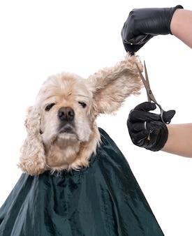 Assistenza professionale per un cane. groomer che tiene gli strumenti nelle mani