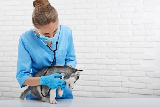 Veterinario professionista che si prende cura del cagnolino