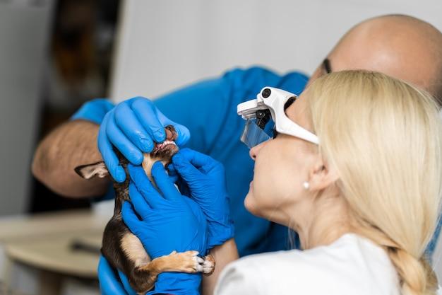 Visita veterinaria professionale dei denti dei cani