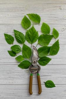 Potatura piante da giardinaggio