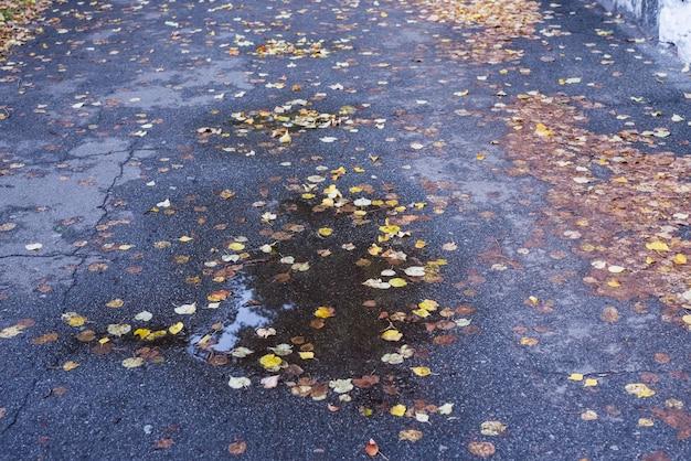 Pozzanghera con foglie cadute sull'asfalto in autunno. tempo piovoso autunnale.