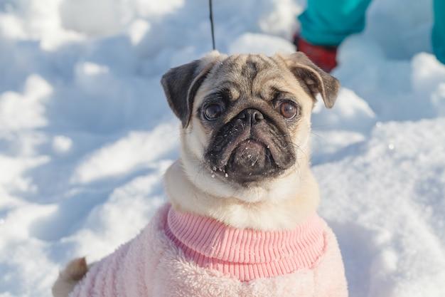 Pug-cane nel giorno di neve