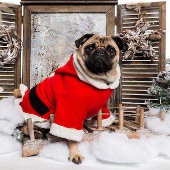Pug che indossa un abito di natale seduto in uno scenario invernale
