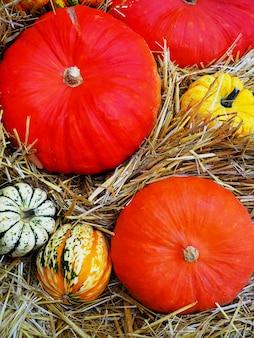 Disposizione della zucca da vendere, natura morta di autunno con le zucche su di legno