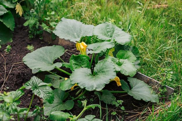 Baby fruit di zucca con fiori e foglie verdi.