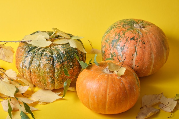 Zucche e foglie di autunno su uno sfondo giallo
