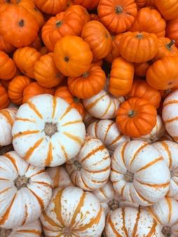 Zucche, raccolto autunnale, piccola zucca, texture o sfondo autunnale.