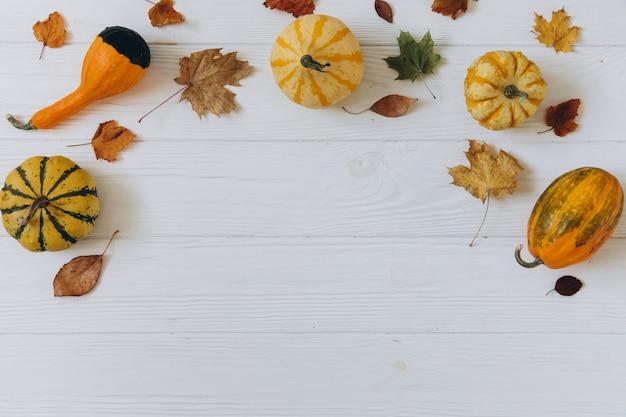 Zucche, foglie secche su legno bianco