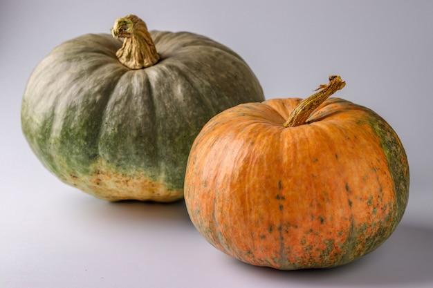 Zucche di verde e arancione su sfondo bianco con un'ombra, natura morta autunnale, concetto minimo di halloween, orientamento orizzontale, primo piano
