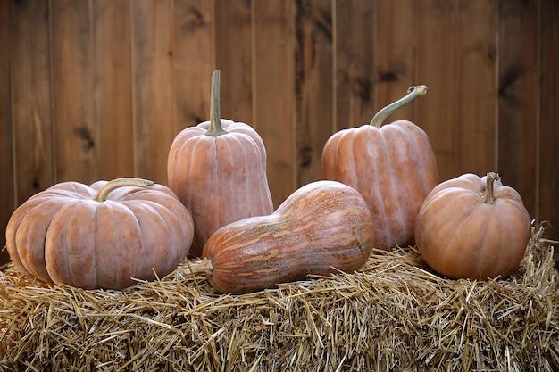 Zucche di varie forme giacciono in fila sulla paglia su un fondo di legno della plancia.