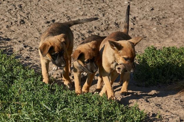 I cuccioli sul prato giocano con un osso e si scaldano sotto i raggi del sole nascente.