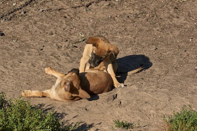 I cuccioli giocano sulla sabbia e si scaldano sotto i raggi del sole nascente.