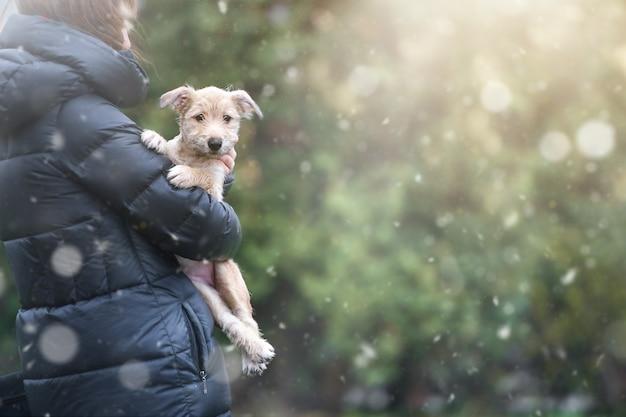 Cucciolo su uno sfondo con bokeh sfocatura. salvataggio animale