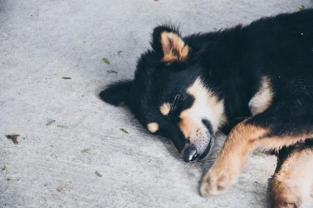 Un cucciolo di cane nero e marrone che dorme sul pavimento di cemento.
