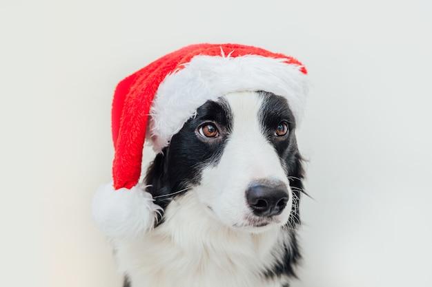 Border collie di cane cucciolo indossando il cappello di babbo natale di natale isolato su priorità bassa bianca