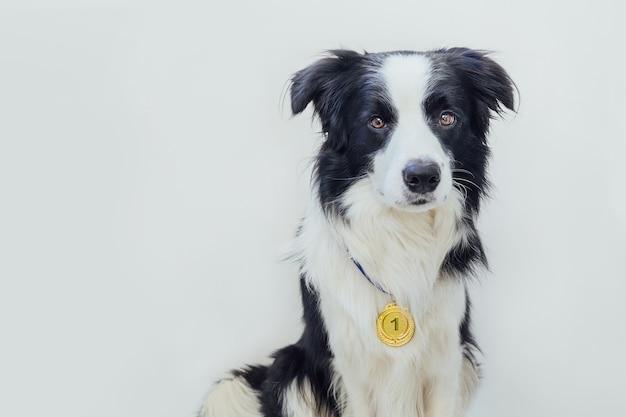Cucciolo di cane border collie indossando vincitore o campione medaglia d'oro del trofeo isolati su sfondo bianco. cane divertente campione vincitore. vittoria primo posto della competizione. concetto vincente o di successo.