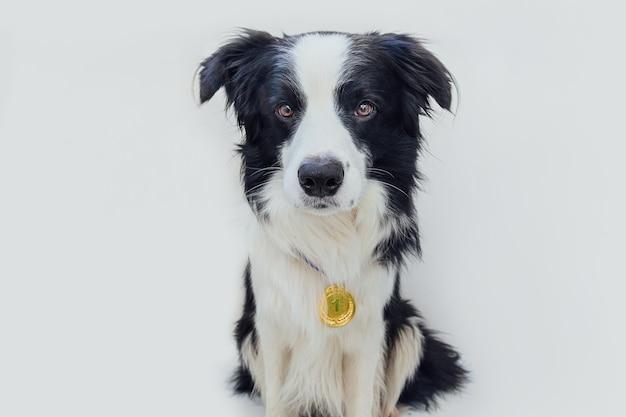Cucciolo di cane border collie indossando vincitore o campione medaglia d'oro trofeo isolato champion