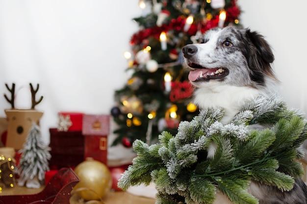 Cucciolo di cane coperto con una ghirlanda avet che celebra le vacanze sotto le luci dell'albero di natale.