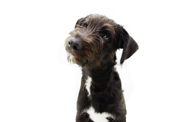 Cucciolo di cane inclinando la testa lateralmente