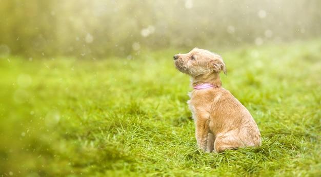 Cucciolo su erba verde. rescue animal: un'immagine da favola.