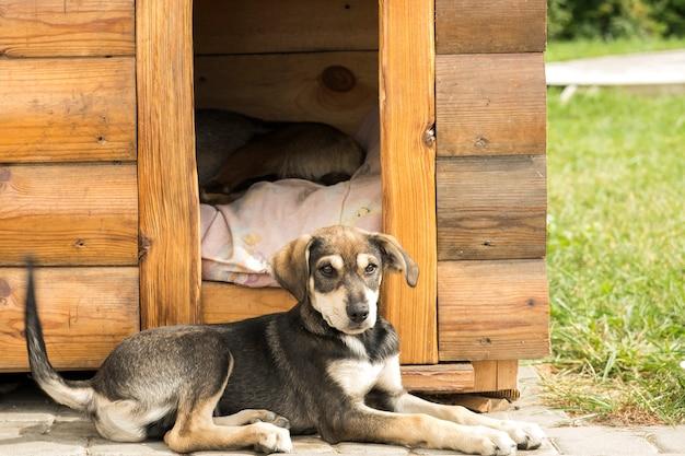 Il cucciolo è sdraiato vicino a doghous. giovane animale domestico