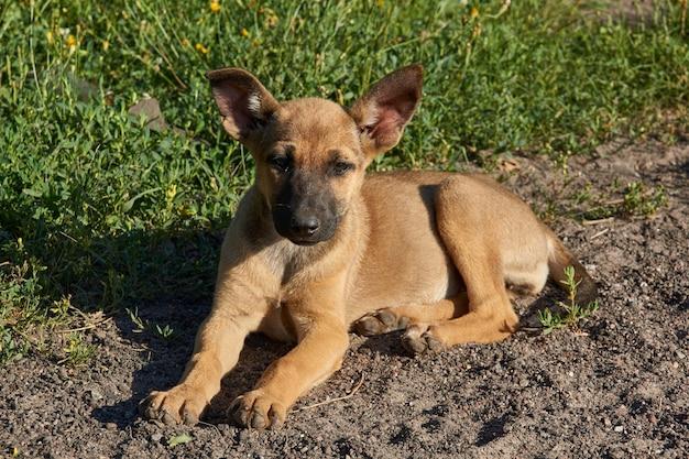Un cucciolo giace sulla sabbia e si crogiola ai raggi del sole nascente.
