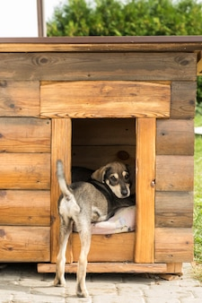 Il cucciolo guarda fuori dalla cuccia. cucciolo divertente