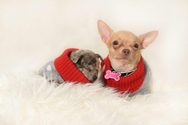 Cucciolo e mamma in abiti riposano insieme