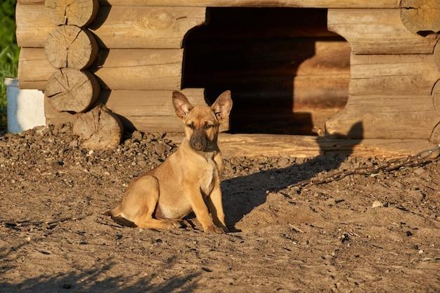 Cucciolo seduto accanto a un canile e crogiolarsi ai raggi del sole nascente.